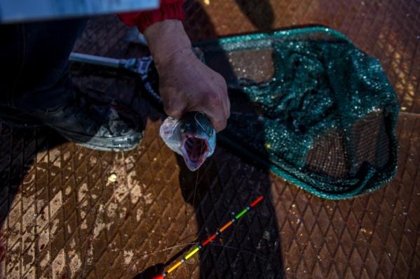 В Курганской области осудили двух браконьеров за ловлю карасей