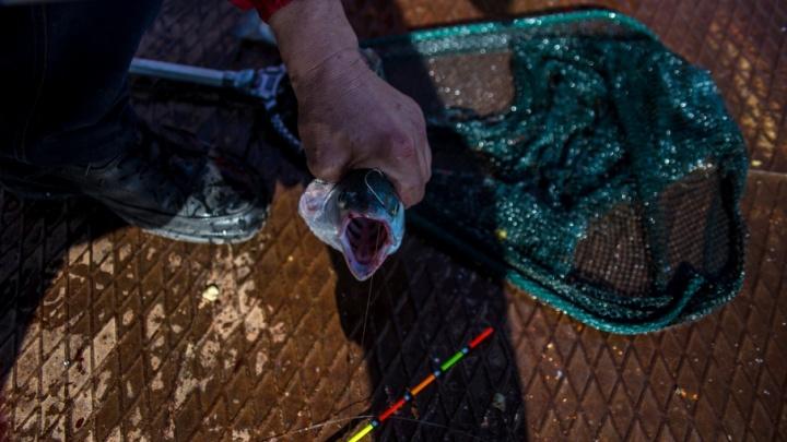 Куртамышских браконьеров осудили за 381 пойманного карася