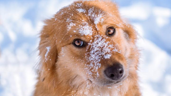 Новосибирская школьница выпустила новогодние календари с милыми фотографиями собак из приюта
