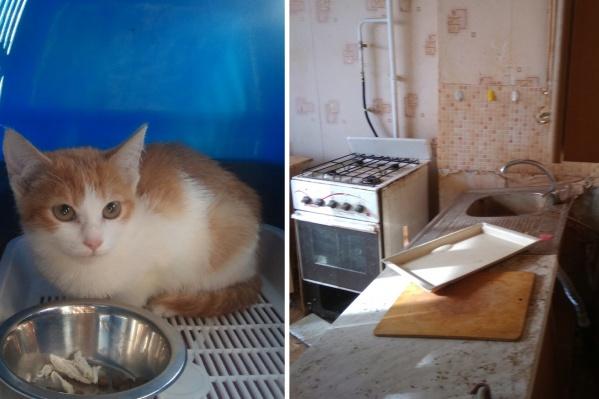 Котенка взяли на поруки зоозащитники