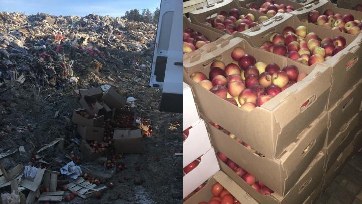 Бульдозер раздавил очередную партию спелых яблок на курганском полигоне ТБО