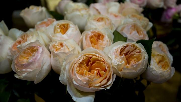 В новосибирских магазинах появилась необычная роза — она дороже обычной и похожа на другой цветок