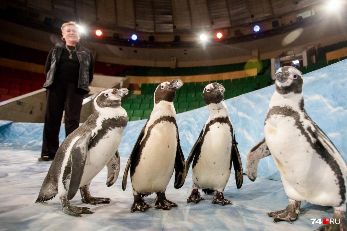 В труппе четыре артиста, прямо как в команде пингвинов из Мадагаскара
