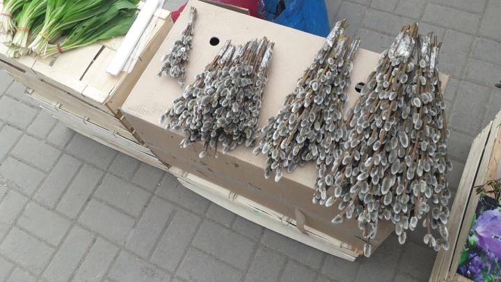 В Новосибирске начали торговать ветками с пушистыми цветами