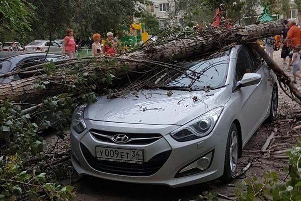 В Волгограде сильный ветер валит деревья на машины