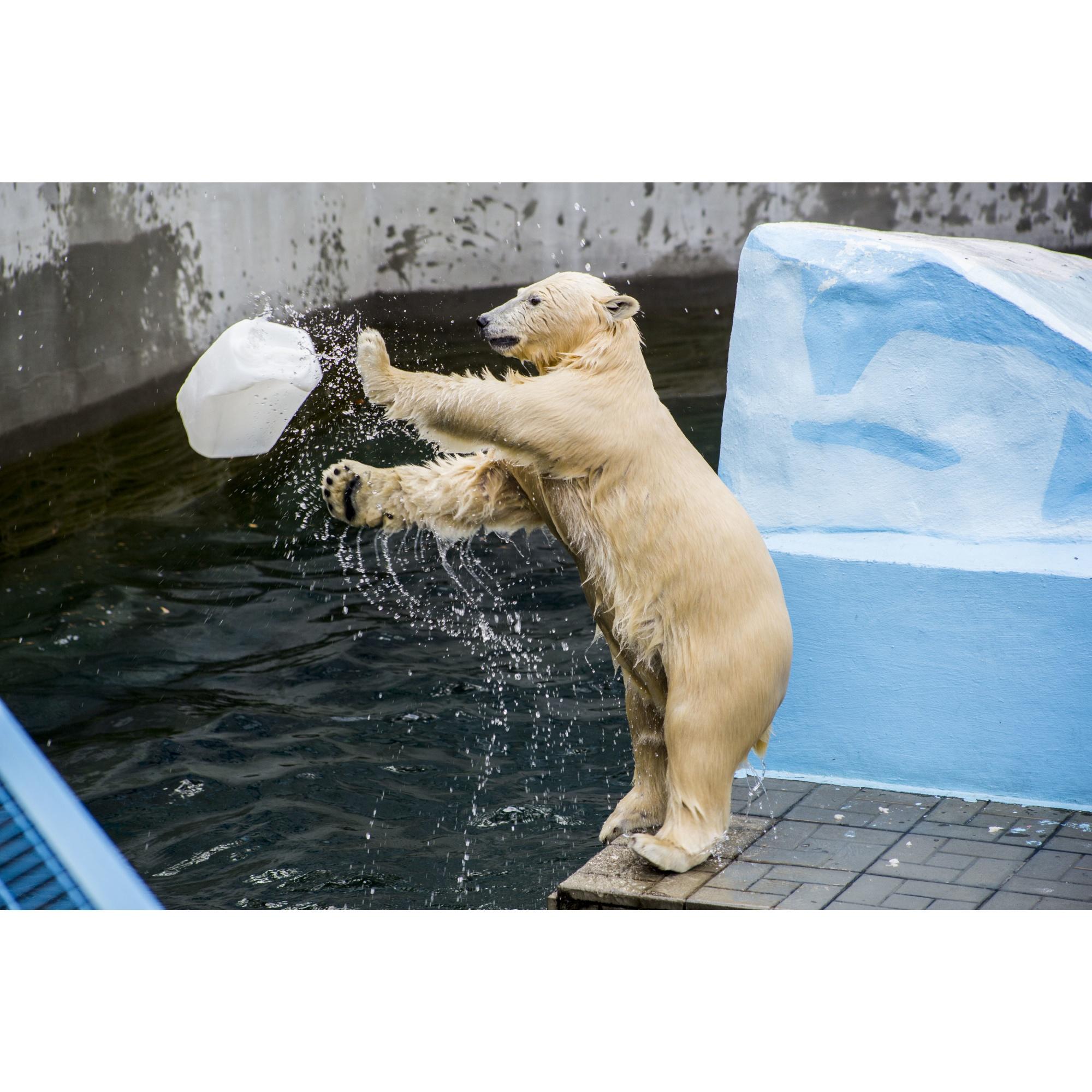 А здесь уже начинается медвежий водный волейбол