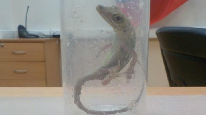 Редких рептилий, конфискованных у челябинца в Кольцово, оценили в 1,2 млн рублей