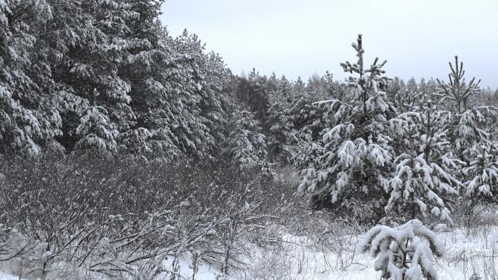 Убил зайца и косулю: в Самарской области поймали браконьера на снегоходе