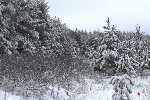 Прямо в лесу егеря удерживали браконьера до приезда полиции