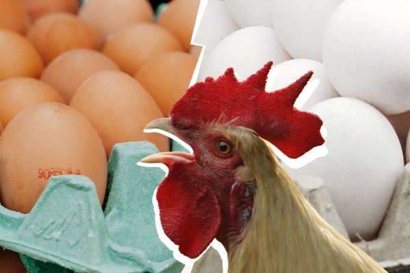 Даже петух был очень удивлён, когда мы сказали ему всю правду о яйцах