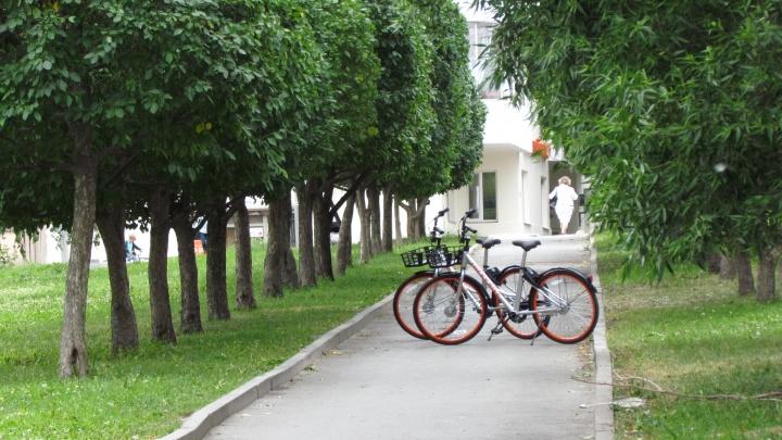 «Уважаемый, куда тащите?»: в Екатеринбурге воришки вновь попались на краже прокатных велосипедов