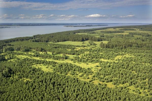 Обширные массивы земель сельхозназначения, заросшие сосновым лесом в Новосибирской области