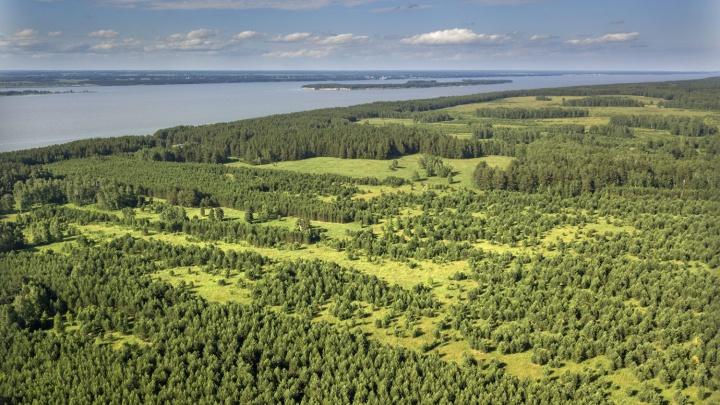 Новосибирская область заняла вторую строчку в рейтинге регионов России по площади пустующих земель