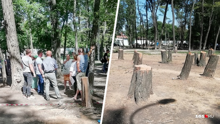 Ростовчане выступили против вырубки деревьев в парке «Осенний» — в прямом эфире 161.RU