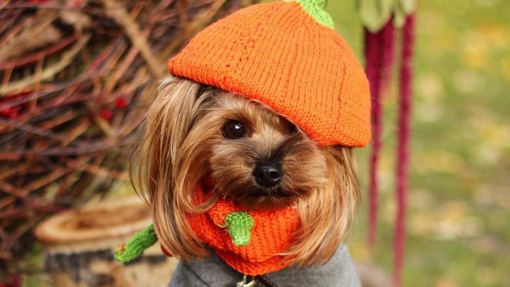 Собаки-уезжаки: 7 милейших псов, которые путешествуют чаще вас