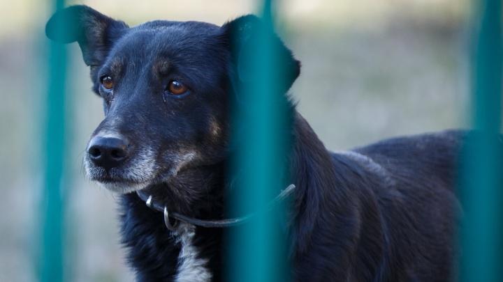 Волгоградцев назвали добрыми к бездомным собакам людьми