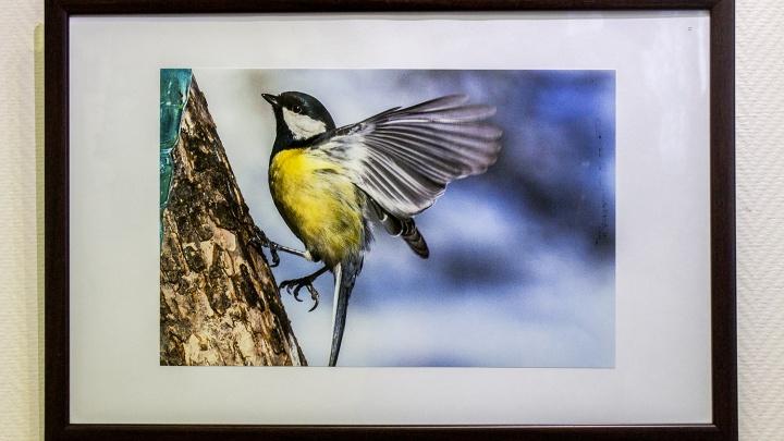В Новосибирске открылась выставка фото птиц, летающих как пуля