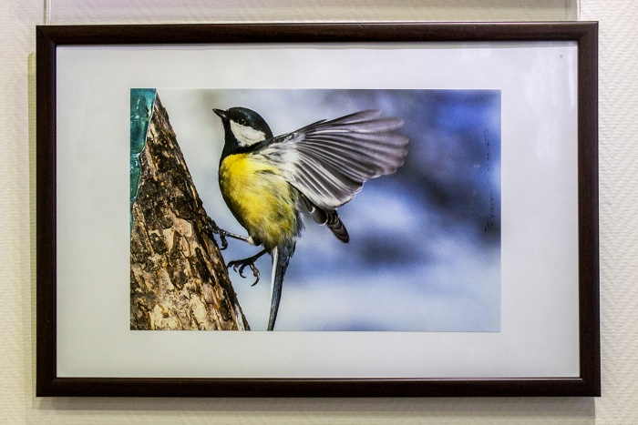 Новосибирский фотохудожник снимает птиц в парках несколько лет
