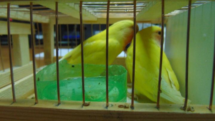 Чемодан с попугаями и канарейками нашли в аэропорту Красноярска