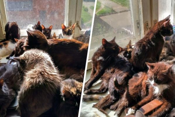 Кошки в квартире просто повсюду