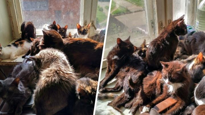 «Животные начали есть друг друга»: ярославна завела в однокомнатной квартире 50 кошек