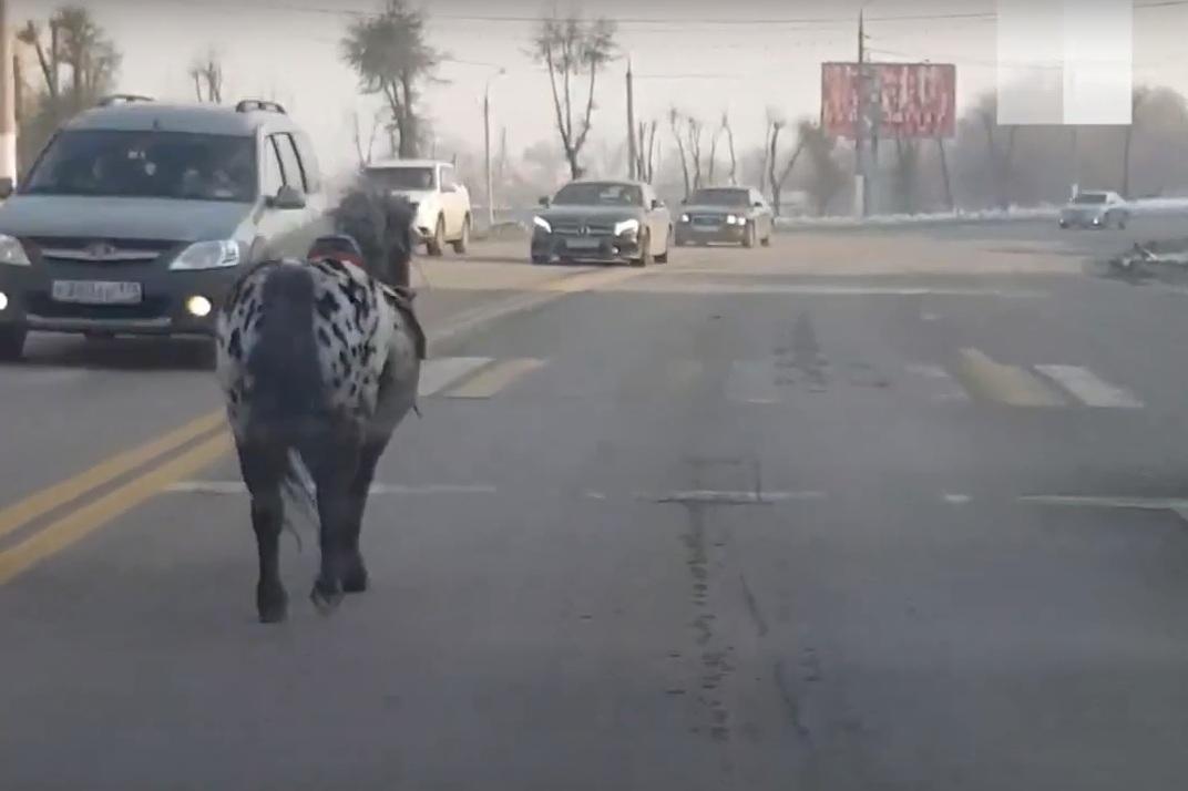 Лошадь удалось прижать к обочине