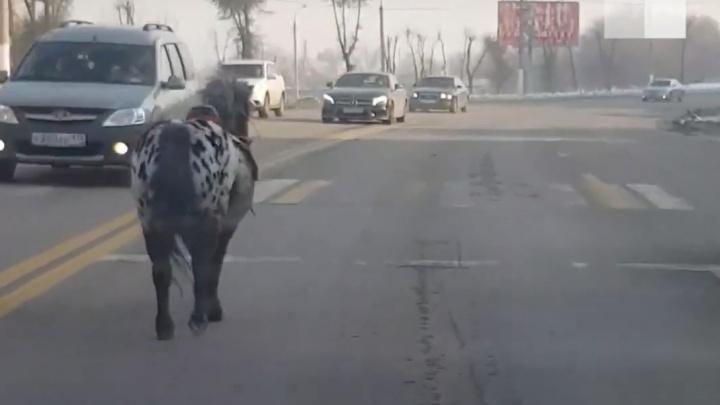 «Бочком прижать»: автомобилисты спасли пони, бегущего по дороге в Магнитогорске