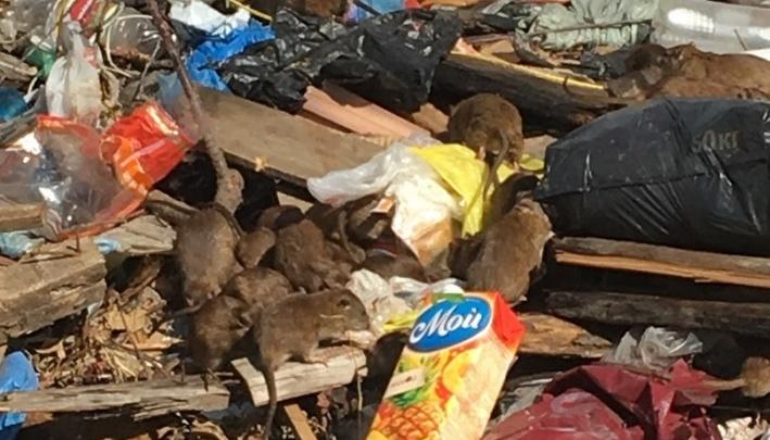 Минприроды РФ и ФАСпроверяютзаконность мусорных тарифовв Волгоградской области
