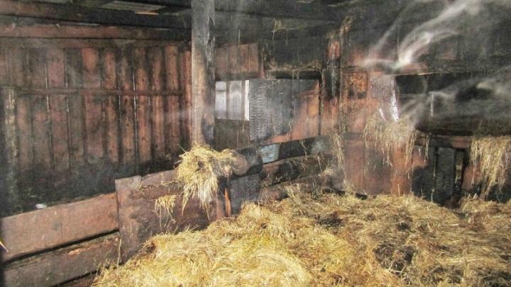 Жительницу Зауралья, поджигавшую дома соседей, посадили на четыре года десять месяцев