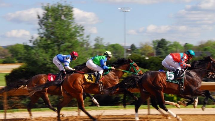 В Новосибирске появился тотализатор для ставок на бега и скачки лошадей