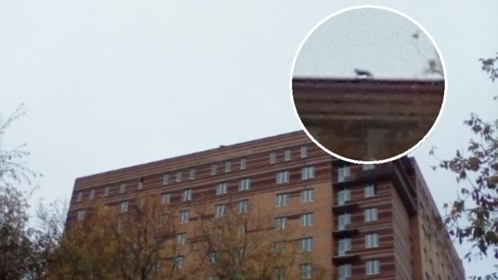 В Перми с крыши 16-этажного дома сняли овчарку