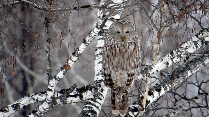 Пятьдесят оттенков серого: читатели 74.ru выбрали лучшее фото ноября