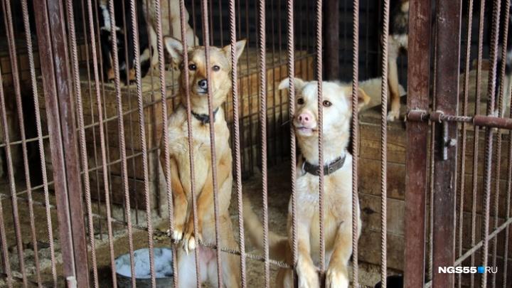 «Сейчас будет другое отношение к собакам»: омское «Спецавтохозяйство» возглавила зоозащитница