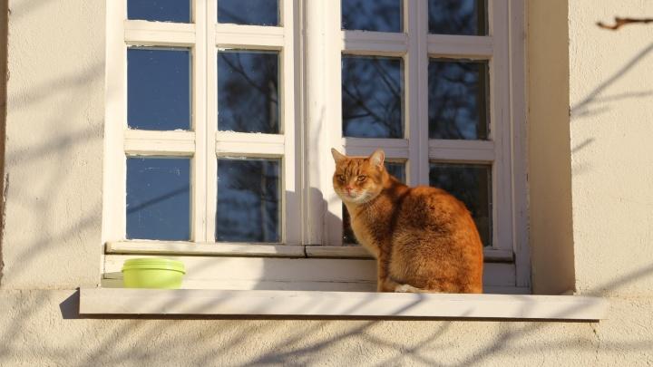 «По специальности Рыжик не работает»: в «Старой Сарепте» четыре года библиотекой заведует мудрый кот