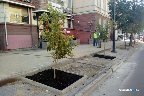 Деревья выглядят миниатюрно, но в мэрии обещают, что они подрастут