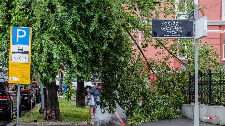 Ливни и штормовой ветер: МЧС предупреждает жителей Прикамья о непогоде