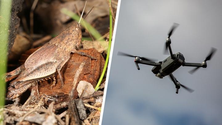 Новосибирские учёные будут искать саранчу с помощью беспилотников