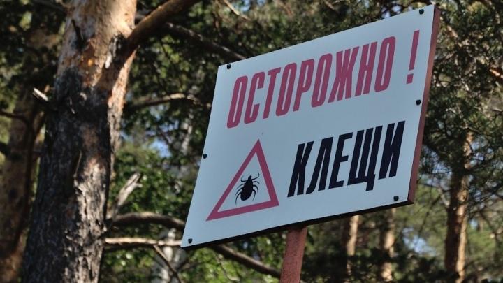 Два человека уже скончались: клещи в Свердловской области стали кусать чаще, чем в прошлом году