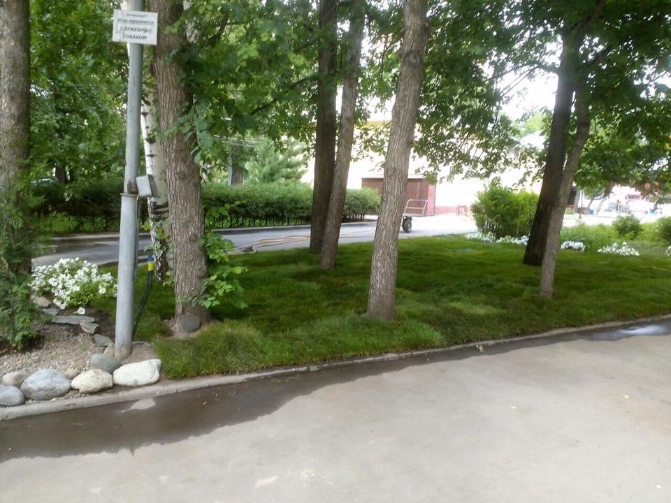 Газон расположился в Центральном парке