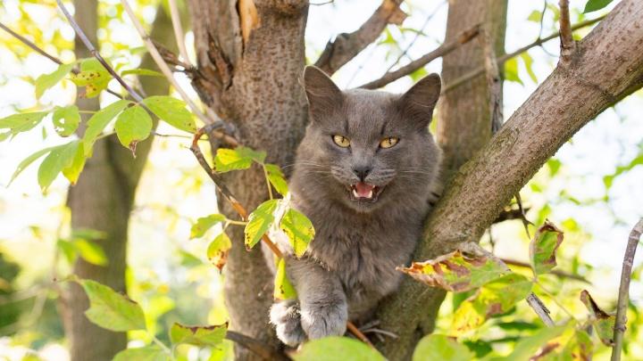 Посмотрите на котика: определяем погоду по поведению домашнего питомца