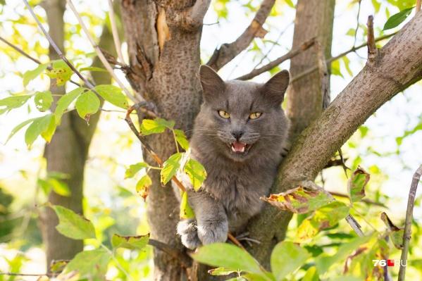 Наши предки по поведению котов определяли, нести в избу дрова или ещё рано