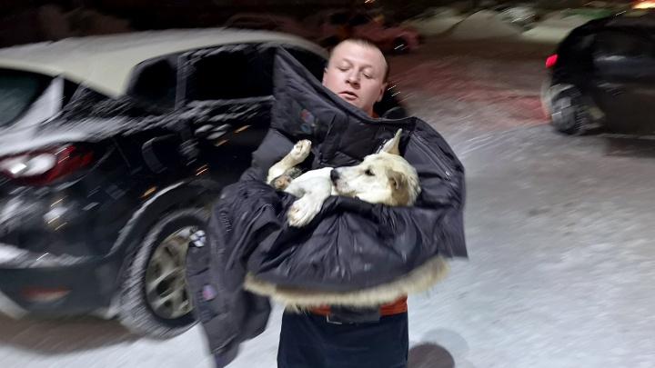 Снял куртку и завернул в неё собаку: ярославец спас сбитого на трассе пса