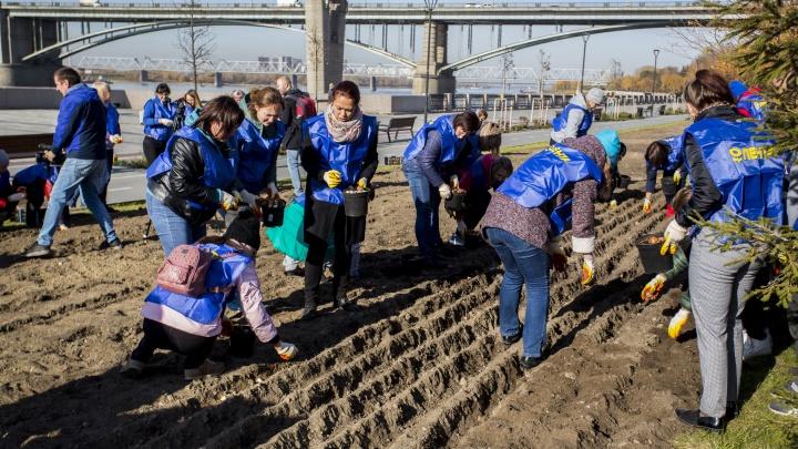 Весной залюбуемся: на Михайловской набережной посадили 30 тысяч тюльпанов