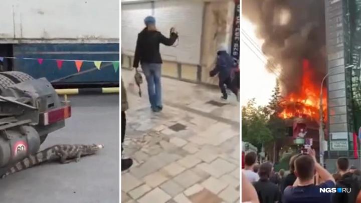 Ребёнок на поводке, крокодил на парковке и пожар в PuppenHaus: самые громкие видео уходящего года