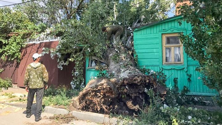 «Повезло, что тополь никого не убил»: жильцы разрушенного дома просили спилить дерево два года назад