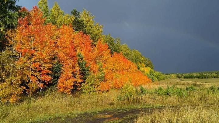 «От красоты перехватывает дыхание»: 8 изумительных фото красноярской осени, которые вас поразят