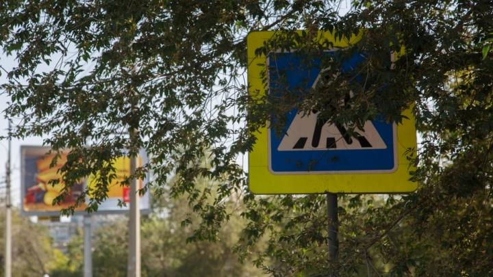 Перед знаком перехода, где зампрокурора Волгограда сбил старушку, обещали срубить ветки