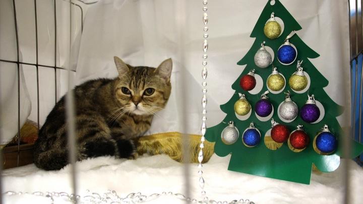 Омичам показали кошек в новогодних палатках с ёлками и мишурой