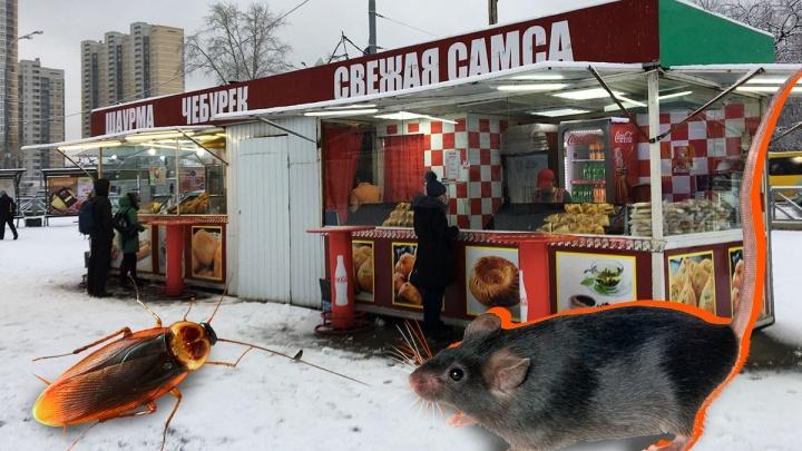 Роспотребнадзор проверит павильон у Южного автовокзала, где готовят самсу среди мух и тараканов