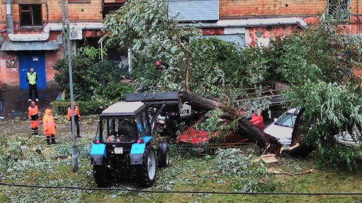 Старое дерево рухнуло на припаркованные машины в доме на Киренского